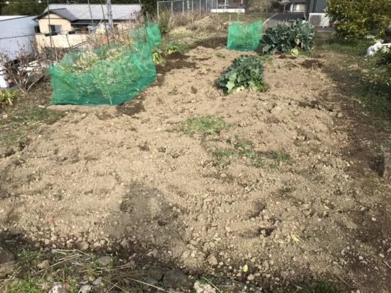 冬野菜の跡